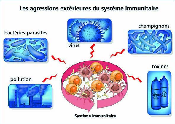 Systeme immunitaire